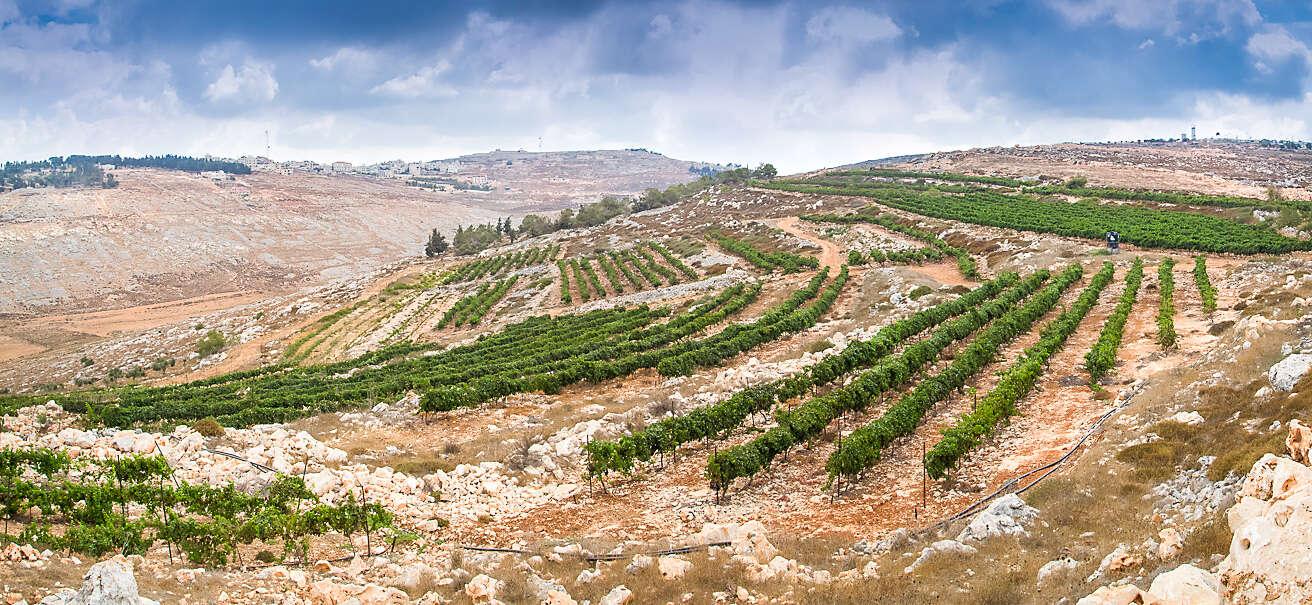 מטיילים עם כוס יין ביד ביקבים