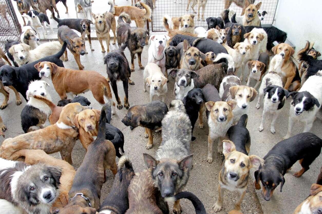 מי הם עשרת הכלבים היקרים בעולם?
