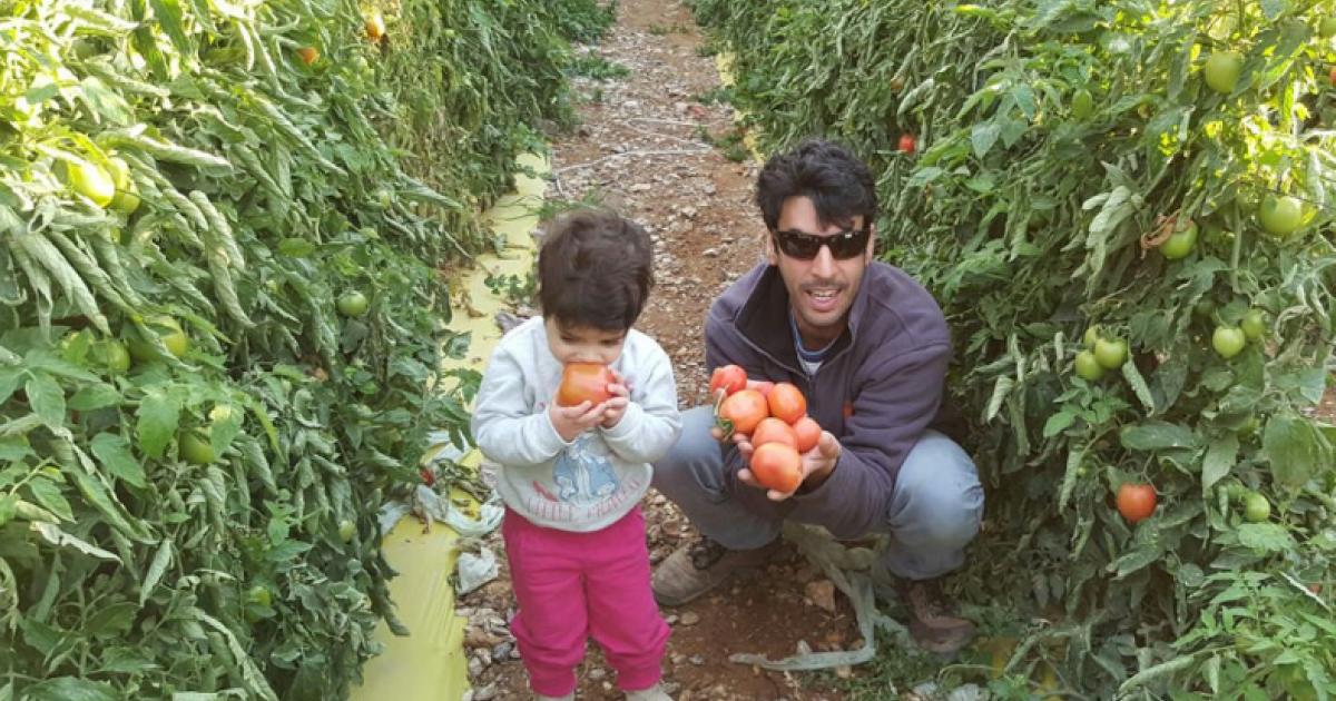 חדשות היום Facebook: רק היום: החקלאי שמזמין לקטוף עגבניות בחינם