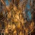 משתפים פעולה כדי לצוד יותר חרקים // צילום ארכיון: צביקה ראובני -ג'יני