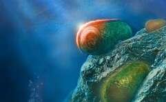 חיידקים פוטוסינתטיים // איור: איתי גולדשמיד