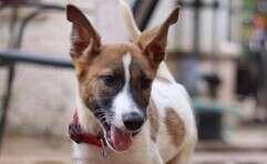 אחד הכלבים שזכו לחיים חדשים // צילום: מורן מזרחי