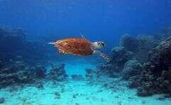 """""""מודעות היא הדבר החשוב ביותר להצלת צבי הים"""" // צילום: גיל קרמר"""