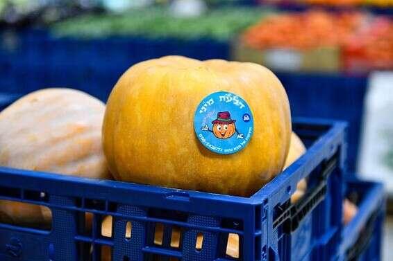 Mini citrouille // Photo: Atar Farm