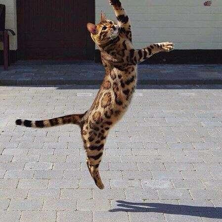 הגדול ת'ור - החתול המושלם שמשגע את הרשת | ישראל היום KK-47